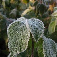Морозным утром. :: ТАТЬЯНА (tatik)