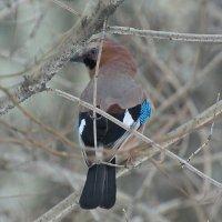 Птицы. :: Геннадий Александрович