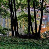 Осенняя мелодия :: Тамара Бучарская