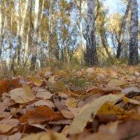 Осень :: Алексей Чипиго