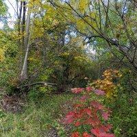 Тропинка в осеннем лесу.... :: Юрий Поляков