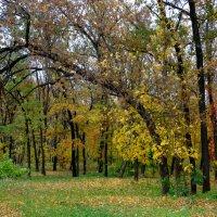 Осень золотая... :: Тамара (st.tamara)