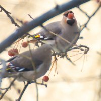 птицы :: evgeny