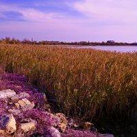 камни, растения, водная гладь, небо :: Андрей Козлов