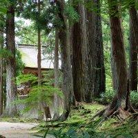 в лесу :: Юля Чарановская