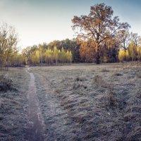 Осень возле моего дома :: Олег Лопухов