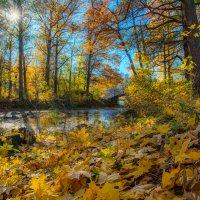 Осень в Монрепо :: Дмитрий Рутковский