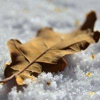 если листья знать могли... :: Василий Либко