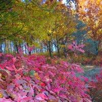 яркие краски осени :: юрий иванов