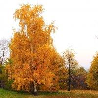 Золотая осень. :: Маргарита ( Марта ) Дрожжина