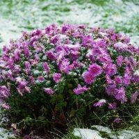 Первый снег :: Андрей Воробьев
