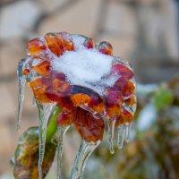 В ледяном плену :: Светлана