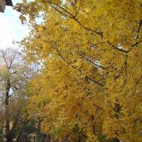 В мой двор прокралась осень незаметно... :: Наталия Павлова