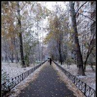 Первый снег :: vadim