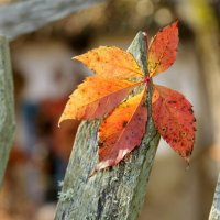Осенний лист :: Lyudmila Petryashina