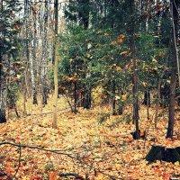 Шишкин лес :: Miss Taty .
