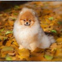Моя первая осень! :: Леонид