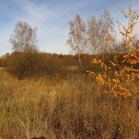 Остатки Золотой осени IMG_2953 :: Андрей Лукьянов
