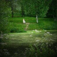 На берегу пруда :: Валерий Талашов