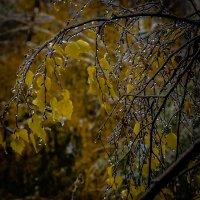 Ледниковый период. 18.10.14 Челябинск :: Марк