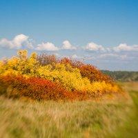 Краски осени :: Влад Никишин