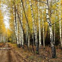 Нежною печалью листопада... :: Лесо-Вед (Баранов)