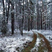 Чуть слышен спор дождя со снегом... :: Лесо-Вед (Баранов)