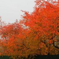 Природа полыхает, искрясь огнями. светится листва... :: Ирина Рачкова