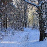 Заколдован лес стоит... :: Галина Стрельченя