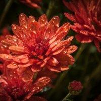 осенние цветы :: Лилия Левицкая