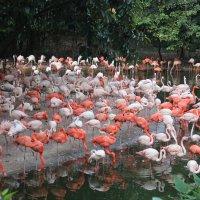 фламинго :: Наталья Фаустова