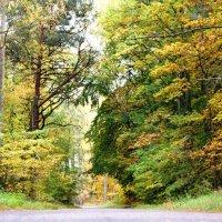 Осенний лес :: Natalisa Sokolets