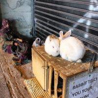 Rabbit tell you ...tune . :: Максим Шпак
