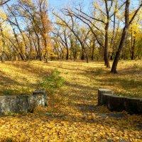 Старый парк... :: Сергей Петров