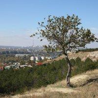 Осень :: владимир Баранов