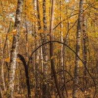 Осенняя мелодия :: Надежда Лаптева