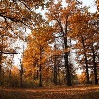 Золотая осень. :: Снежанна Родионова