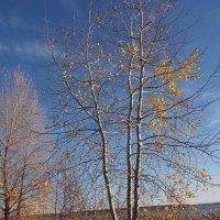 Осень :: Игорь Ковалев