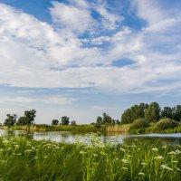 Тихая речка. :: юрий Амосов