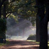В парке Дубки солнце вставало... :: Юрий Цыплятников