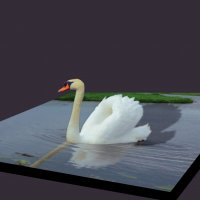 Лебедь :: Сергей Шруба
