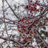 """""""Зимний дождь резвился накануне: всё покрылось коркой ледяной..."""" :: Надежда"""
