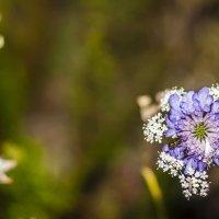 интересный цветочек :: Сергей Леонтьев