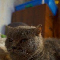 Любимое животное :: Наталия Евгеньевна