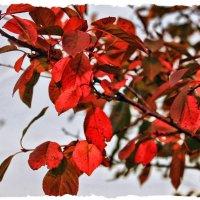 И Осень тихою вдовой вступает в пестрый терем свой... :: Валентина ツ ღ✿ღ