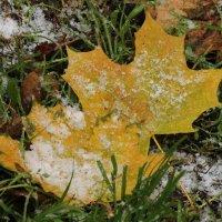 Первый снег :: Вера Моисеева