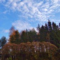 кучерявые облака :: Валентина. .
