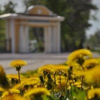 Старый парк... :: Лариса Ошкина