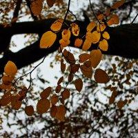Осенняя листва :: Полина Калинкина