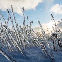 После ледяного дождя :: Анатолий Юдин